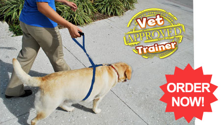 Buy Instant Trainer Leash